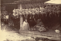 A Plantain (or Banana) Stall in the Fruit Market at the bottom of the King's Bazaar, [Mandalay]